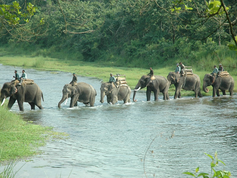 Jungle Safari-Chitwan